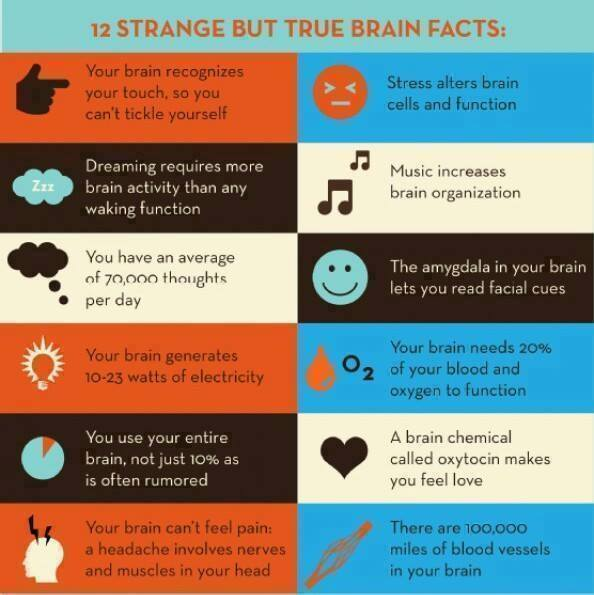 12 strange but true brain facts