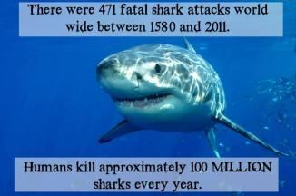 Humans kill approximately 100 million sharks every year.