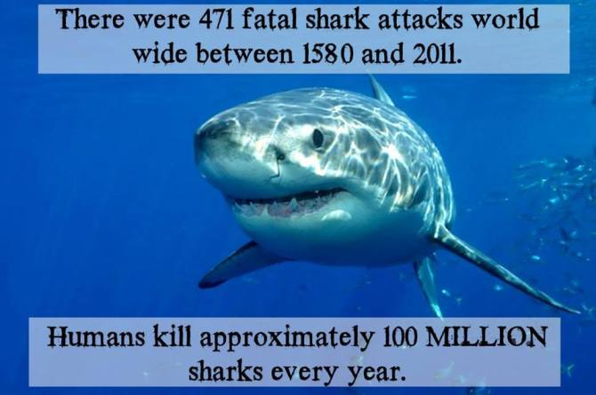 Humans kill approximately 100 million sharks every year.